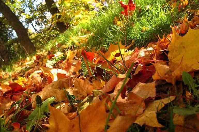Лес в опадающих листьях