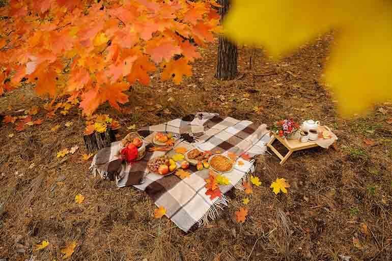 Пикник в осеннем лесу