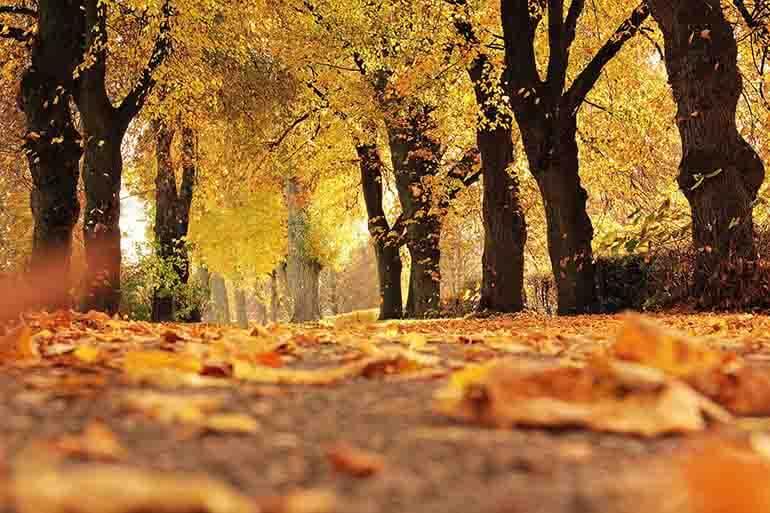 Запечатлеть осень